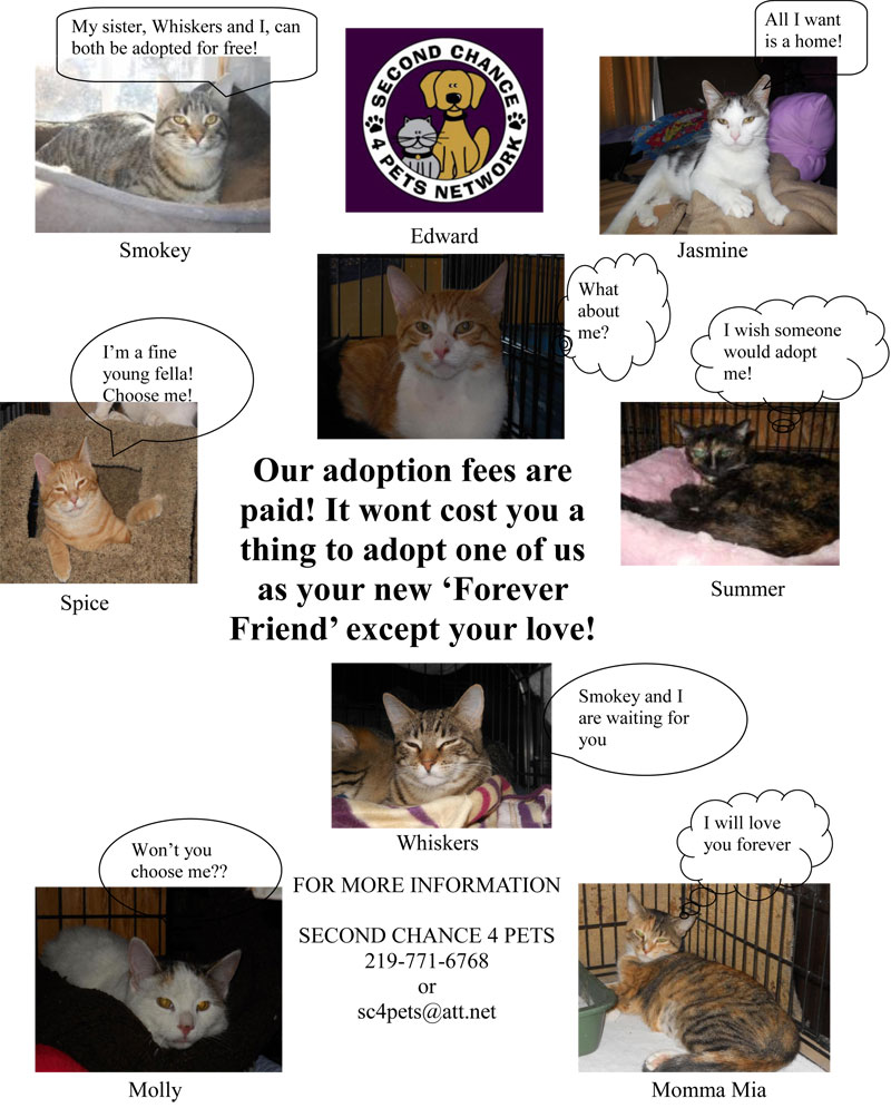 Second Chance 4 Pets Network has Wonderful Cats Available for Adoption in 2015