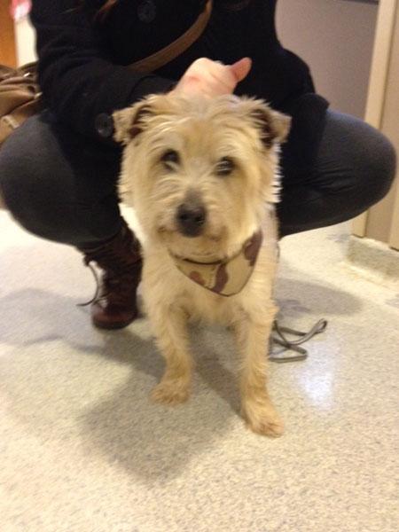 Stray Dog Brought to Vale Park Animal Hospital