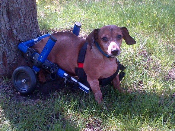 National Disabled Pets Day: Ernie's Story