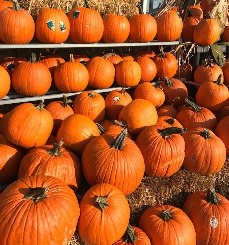#1StudentNWI: Westville's Halloween Festivities
