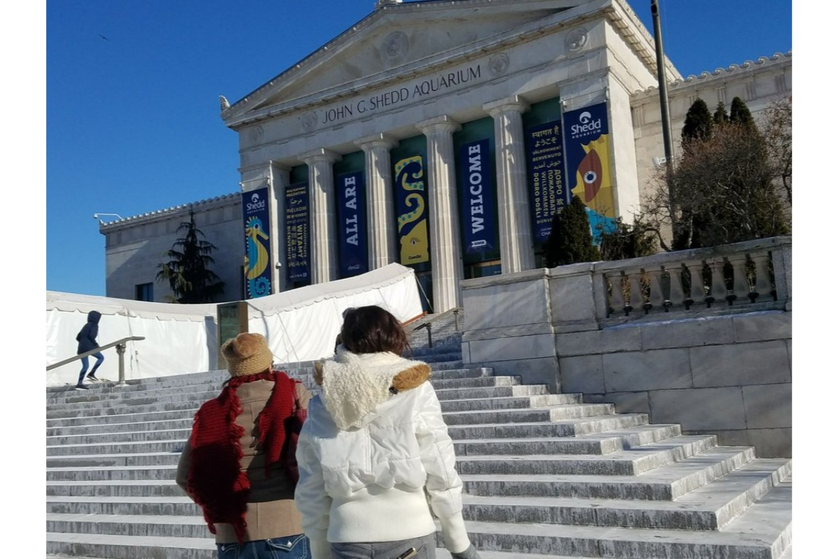 Shedd Aquarium Offers Free Admission for Furloughed Government Employees & Families