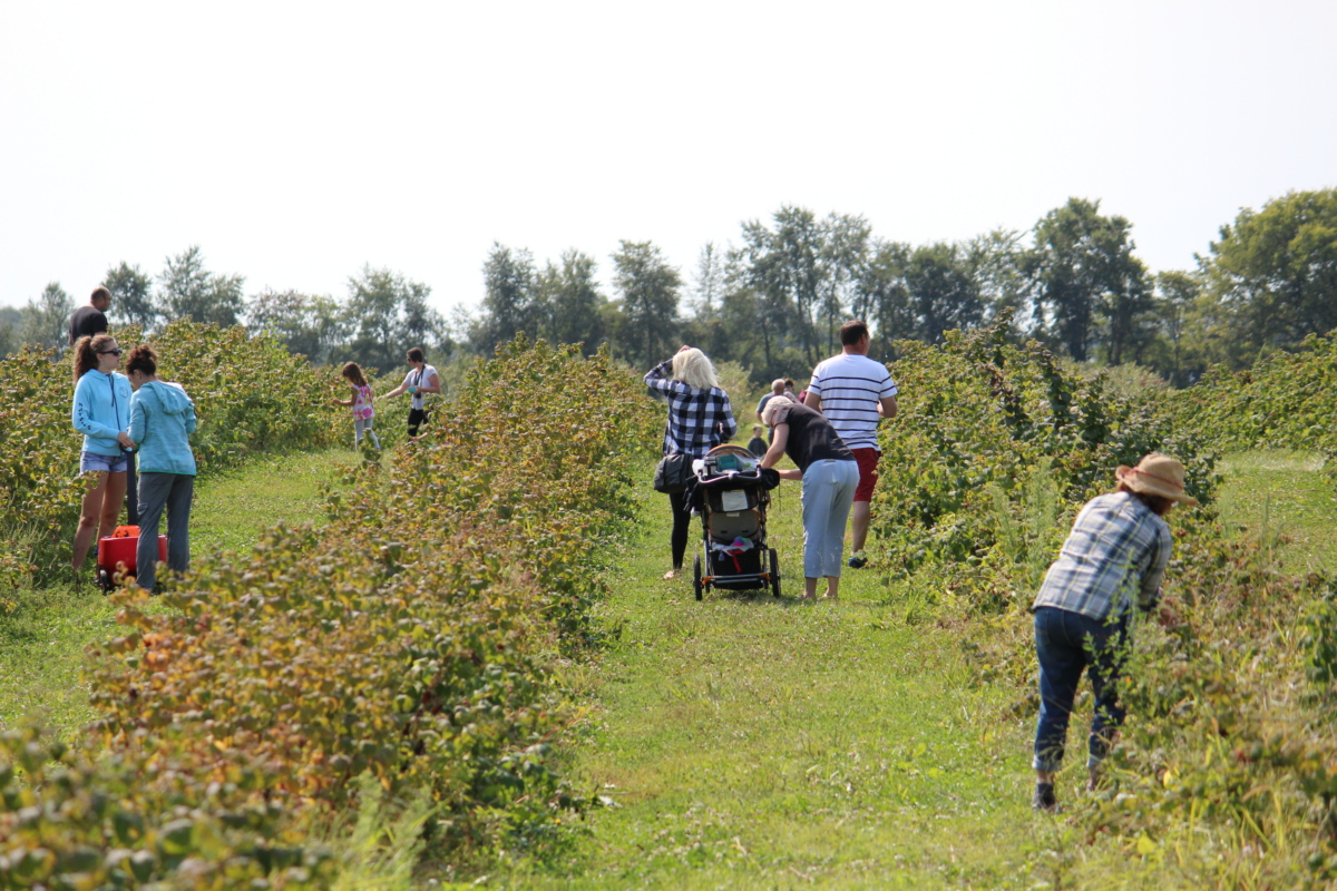 Orchard Season is Upon Us! Check Out What the Region Has to Offer